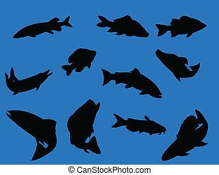 pez azul, plano de fondo