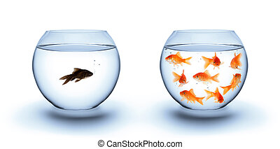 pez, concepto, -diversity, soledad