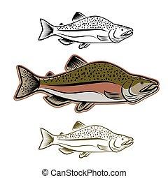 pez, Conjunto,  Salmón, Ilustración
