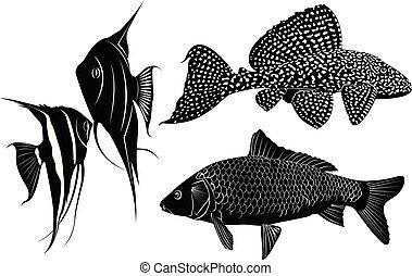 pez, conjunto, siluetas