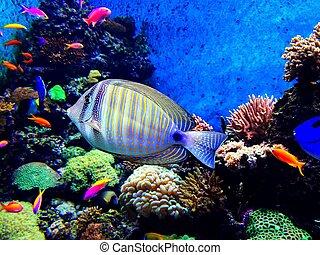 pez, en, un, acuario
