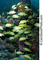 pez, en, un, arrecife