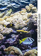 pez, fondo del mar, barrera coralina