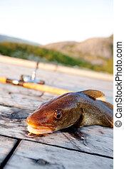 pez fresco, bacalao