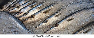 pez fresco, barracuda, mercado
