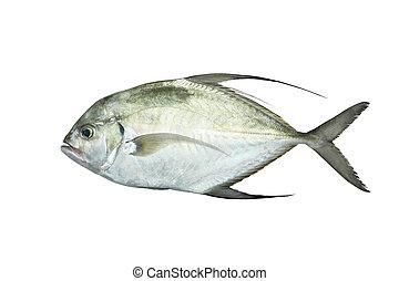 pez fresco