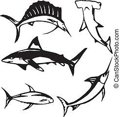 pez, grande, océano, cinco