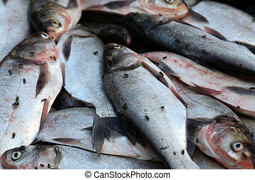 pez,  India, Mercado,  kumrokhali