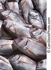 pez, mar, expuesto