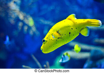 pez, marina, amarillo
