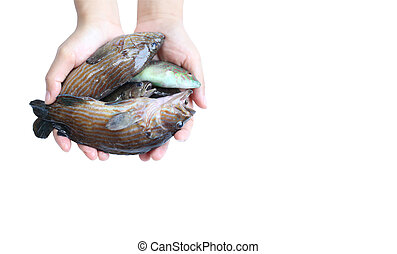 pez, marina, mano
