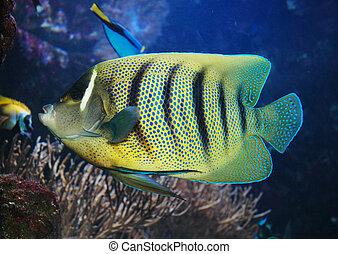 pez, marina