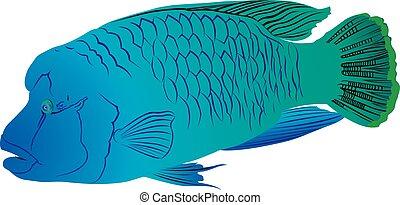 pez, napoleon