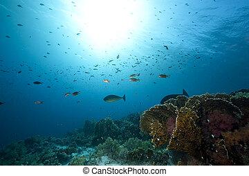 pez, océano, coral