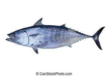 pez pequeño, tunny, coger, atún, mariscos
