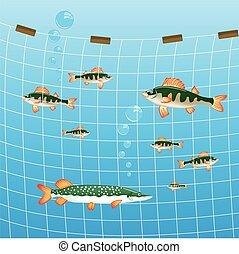 pez, pesca río, red