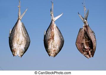 pez, secado, en el sol