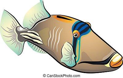 pez, triggerfish., aislado, plano de fondo, picasso, blanco