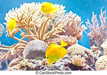 pez tropical