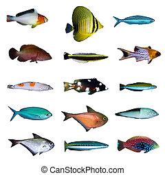 pez tropical, colección