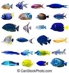pez tropical, conjunto