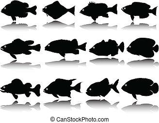 pez, vector, siluetas, colección