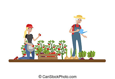 pezze, coltivatori, verdura, irrigazione, femmina, felice