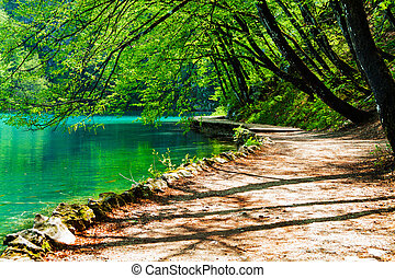 pfad, bei, a, waldsee, in, plitvice, seen, nationalpark, kroatien