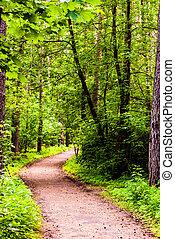 pfad, in, wälder