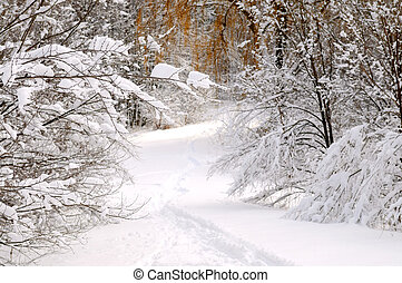 pfad, in, winter, wald