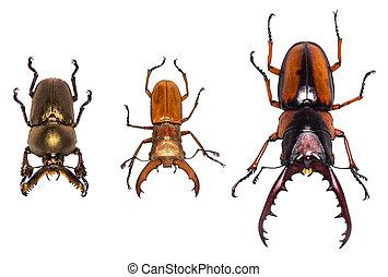 pfade, ausschnitt, käfer, freigestellt, sammlung, hintergrund, weißes