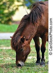 pferd, auf, grünes gras