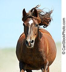 pferd, beeilen, galopp