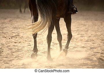 pferd, beine, weg, ende, traben