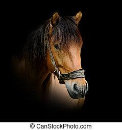pferd, dunkler hintergrund