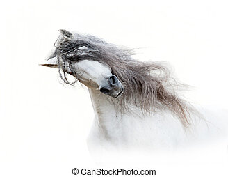 pferd, freigestellt, langer, andalusian, mähne, weißes