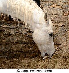 pferd, frisst, heu