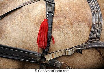 pferd, geschirr