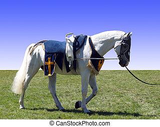 pferd, gewölbe, pferdesattel
