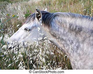 pferd, grau