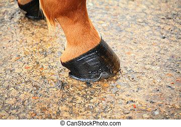pferd, huf