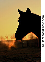 pferd, in, der, nacht