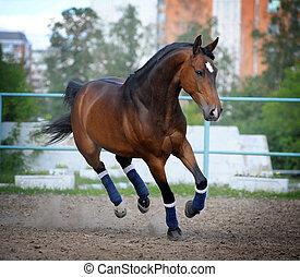 pferd, in, sattelplatz