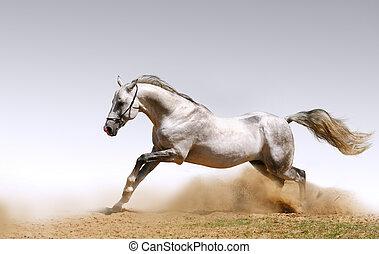 pferd, in, staub