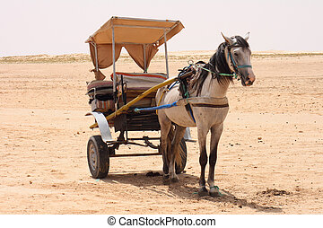 pferd, in, wüste