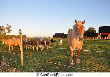pferd, kälber