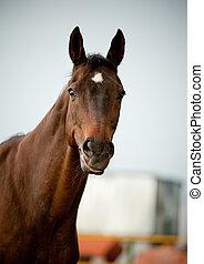 pferd, lächeln