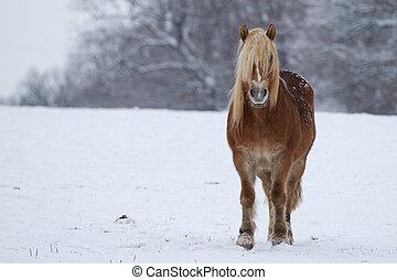 pferd, landschaftsbild, verschneiter