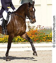 pferd mitfahrer, dressage