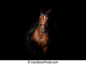pferd mitfahrer, in, dunkelheit